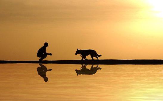 Cão, Homem, Água, Reflexão, Silhueta