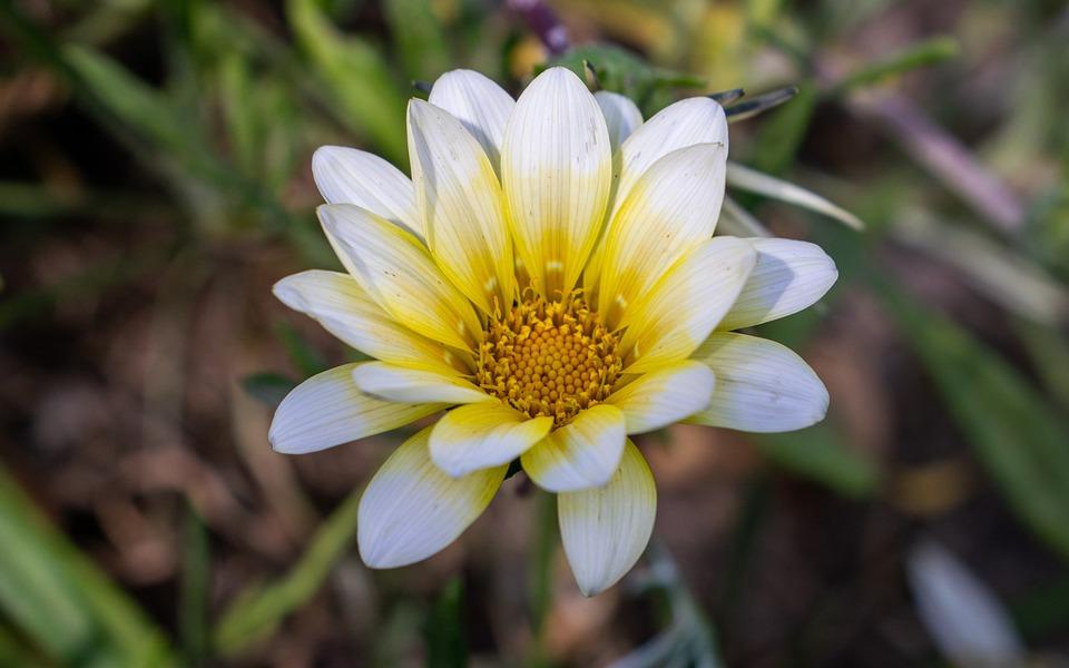 Flore, Plante À Massif, Plantes De Jardin