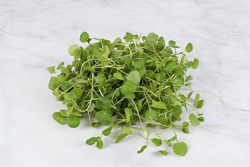 Watercress, Crazy La, Cresson, Water And