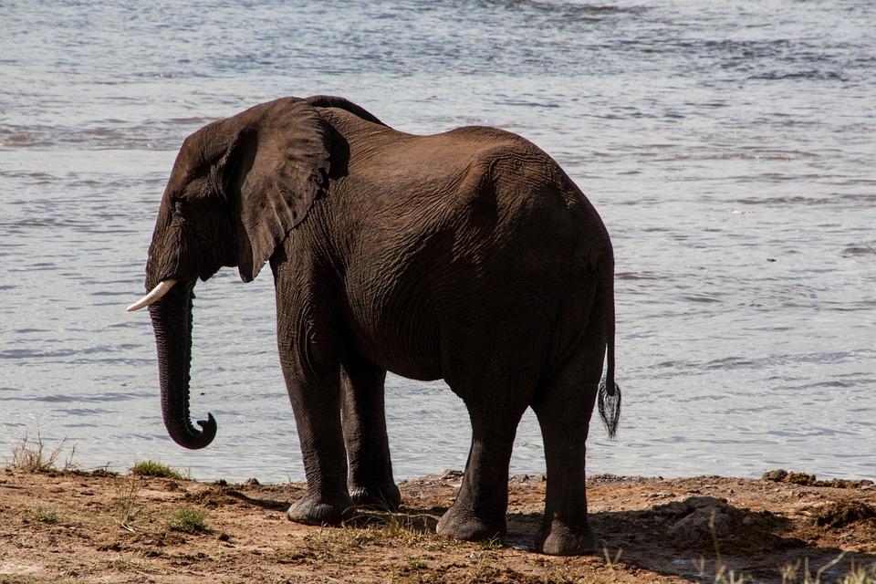 Afrika Selatan Gajah Air Foto Gratis Di Pixabay