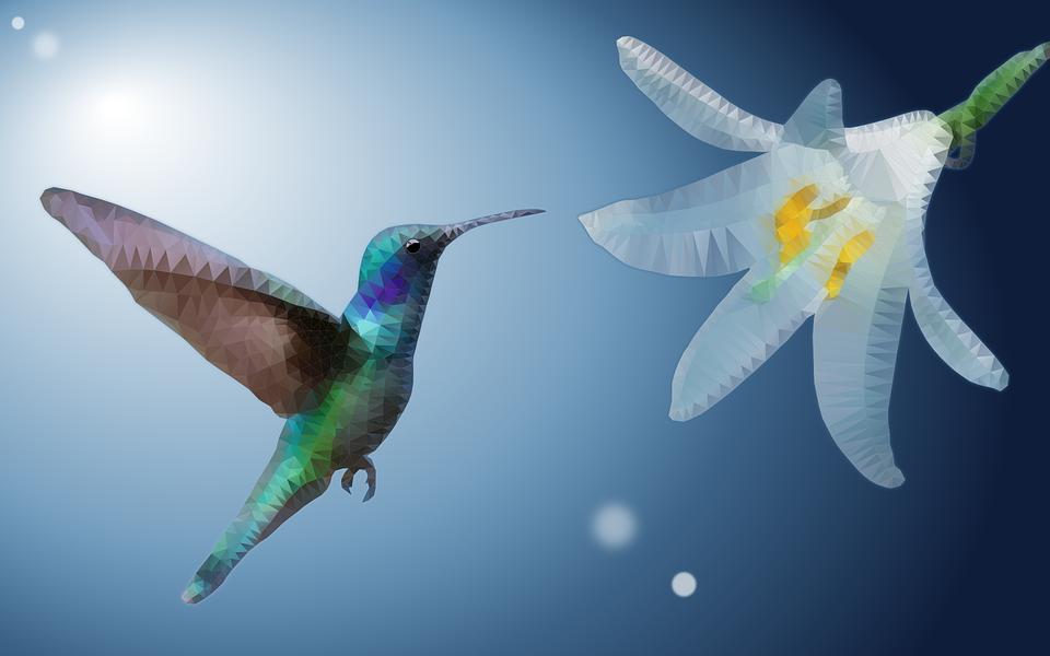 Kolibri, Ave, Virág, Alacsony Poli, Egzotikus