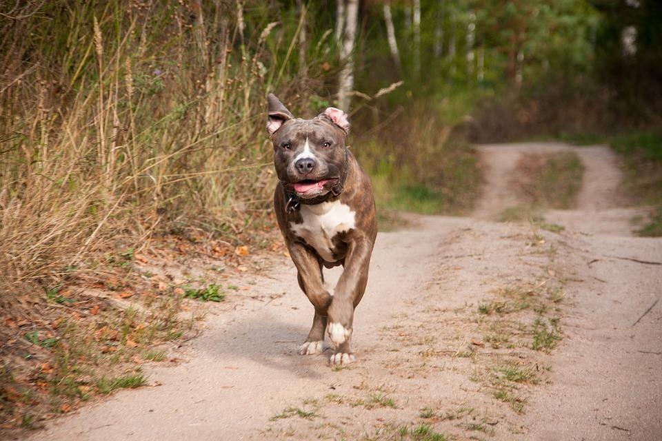 Una perra maltratada comparece en su propio juicio
