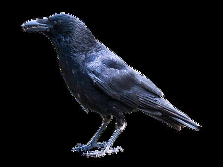 τέρας μαύρο πουλί βίντεο παχουλός μαύρες λεσβίες