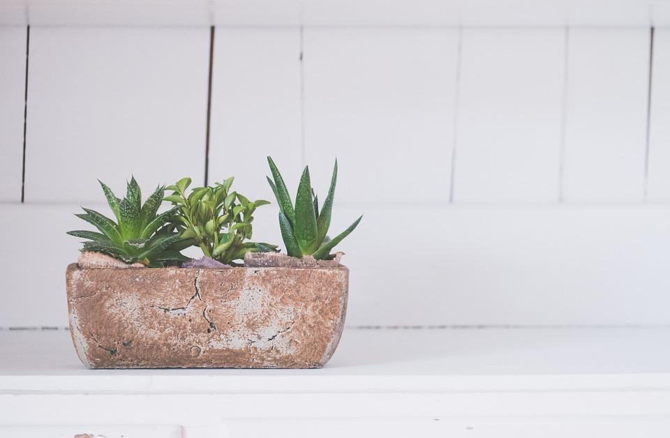 Cara membuat ruangan sejuk tanpa AC. (Foto: Pixabay)