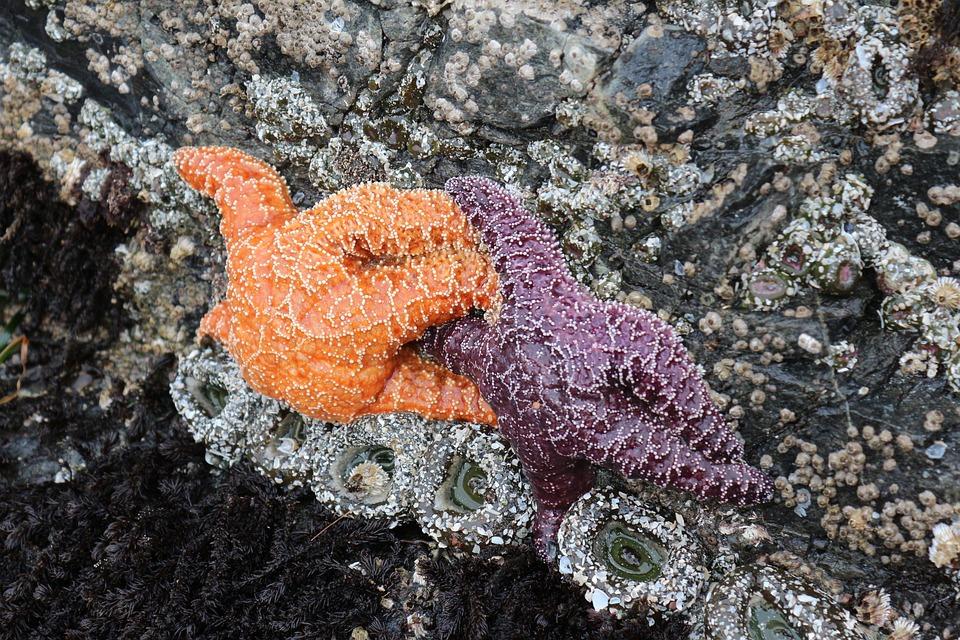 Download 60 Koleksi Gambar Ikan Dan Bintang Laut Terpopuler