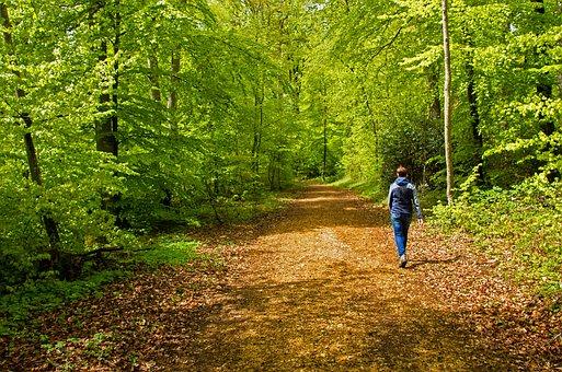 Zielony, Spacer W Lesie, Liść Zielony