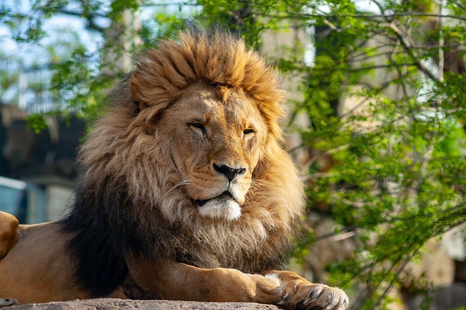 wild animals 4164868 960 720 » Fünf Orte für Kinder in Dresden