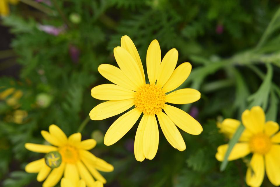 Fiori Gialli 8 Petali.Fiore Fiori Gialli Petali Foto Gratis Su Pixabay