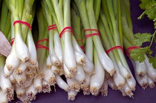 新緑のネギの束, 野菜, 食品, 収穫, 春タマネギ, 市場