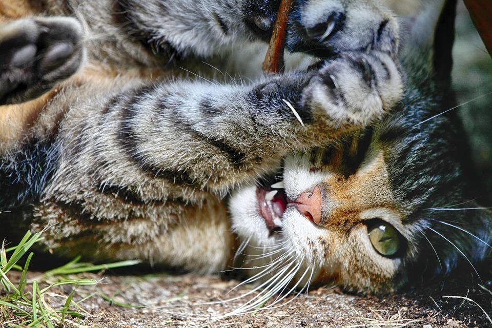 kočička hrát