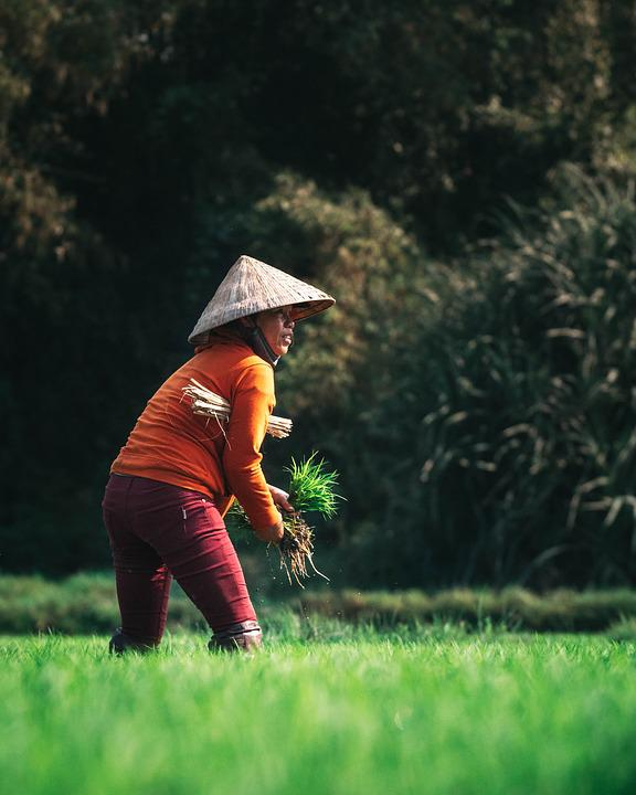 Farmer Agriculture Harvest