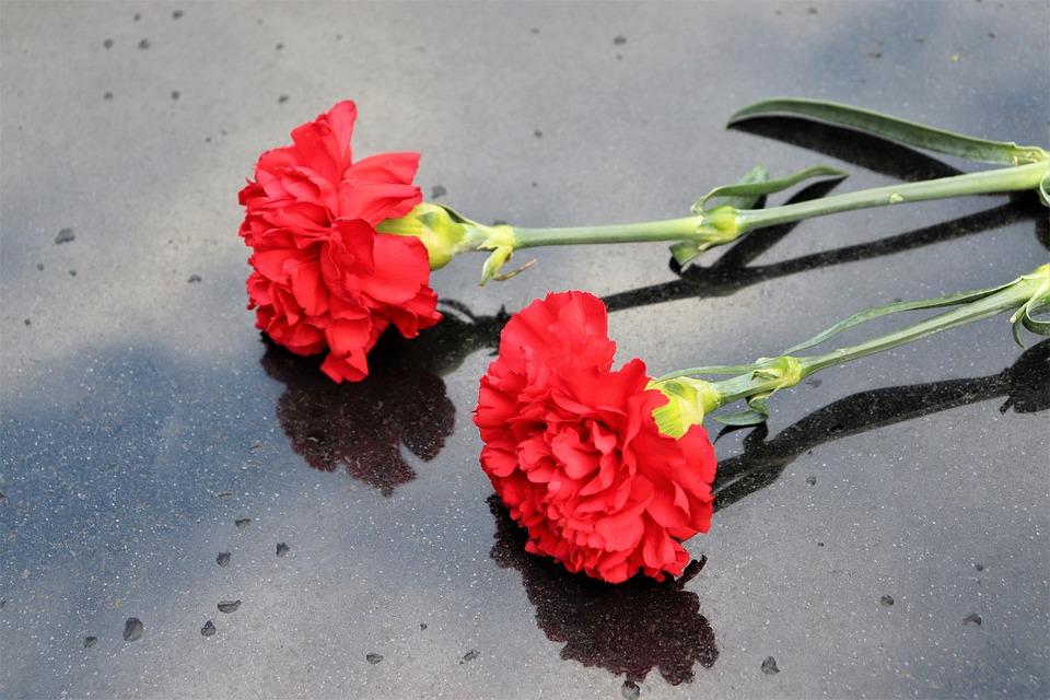 Две Красные Гвоздики Черный Мрамор - Бесплатное фото на Pixabay