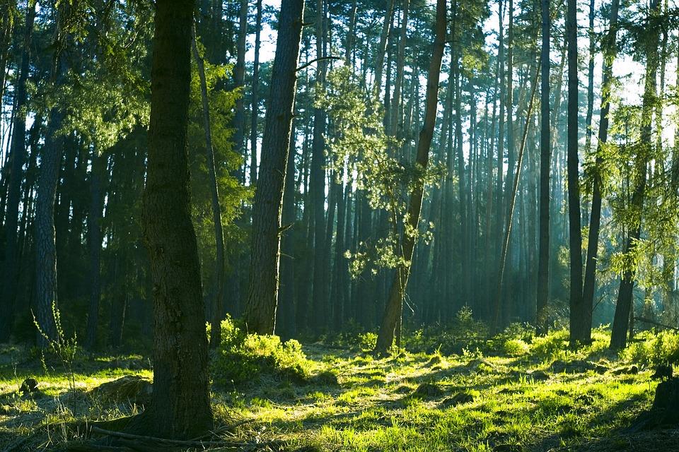 森, 美しい, 朝, ツリー, ネイチャー, 風景, 水, 林, ステージ, 神秘的, 霧の中, 気分, 光