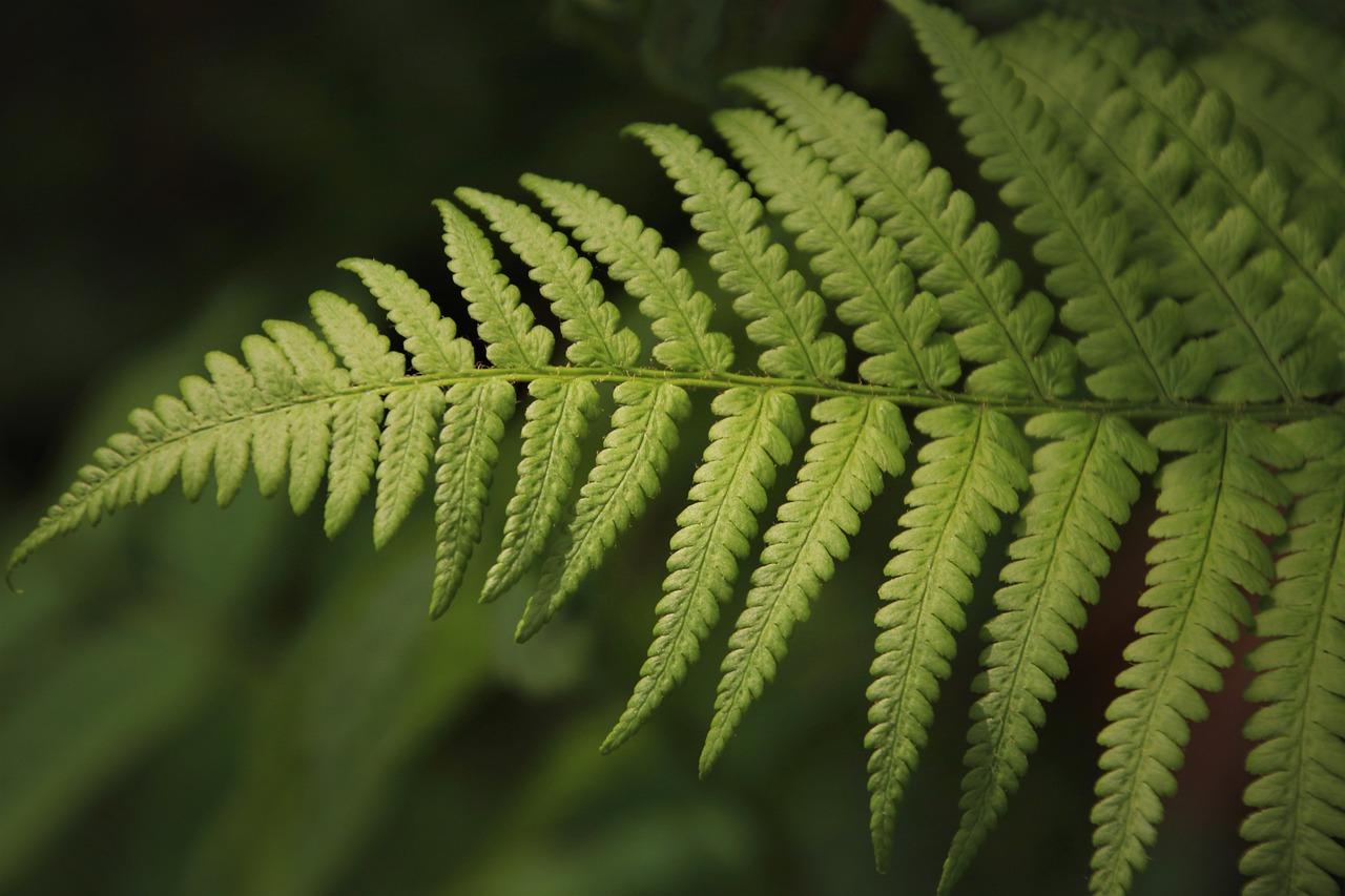 Fern Green Leaf - Free photo on Pixabay