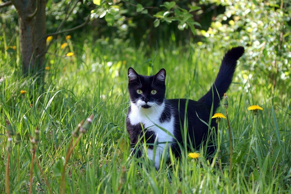 0dd4b02656d8 Γάτα Γατάκι Κατοικίδιο Ζώο - Δωρεάν φωτογραφία στο Pixabay