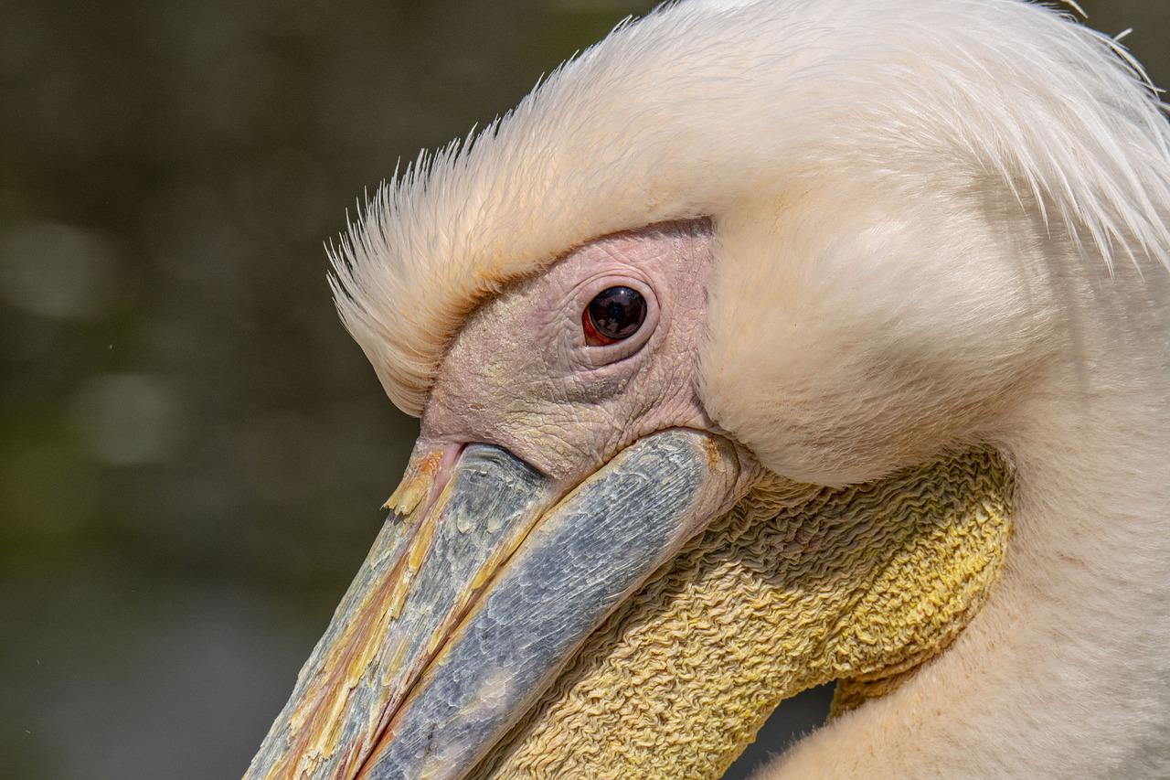 расстоянии картинки пеликана к деньгам один набор