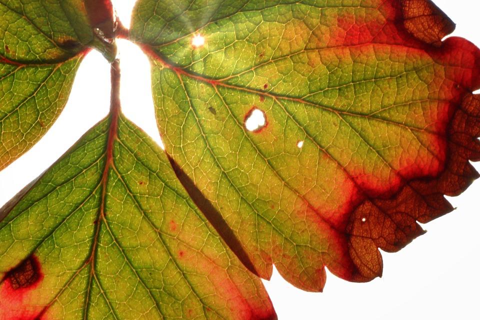 Leaf Autumn Nature Fall - Free photo on Pixabay