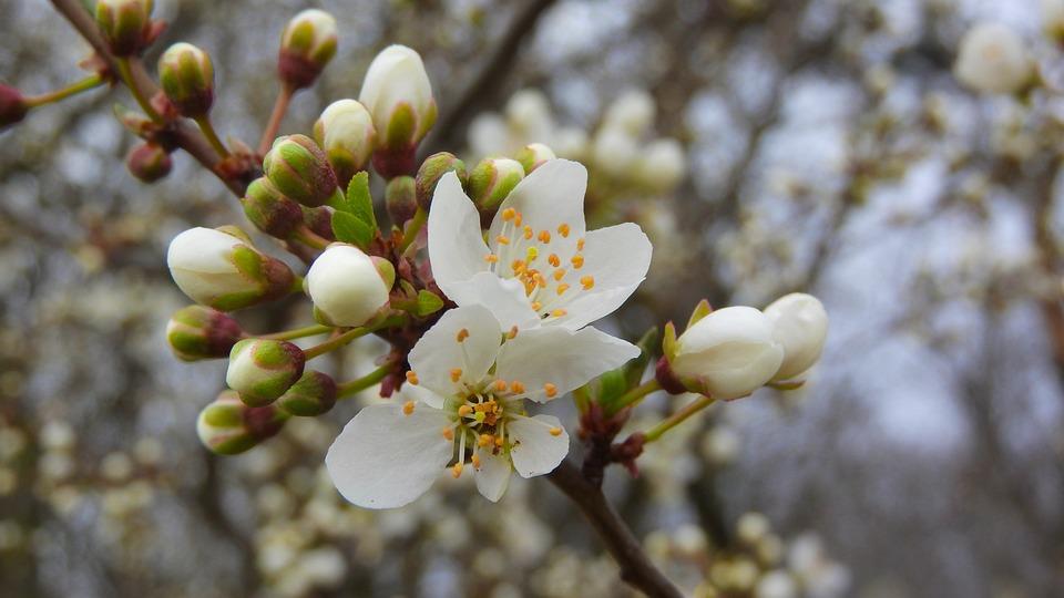 Fiori Bianchi Di Primavera.Fiori Di Primavera Bianchi Foto Gratis Su Pixabay