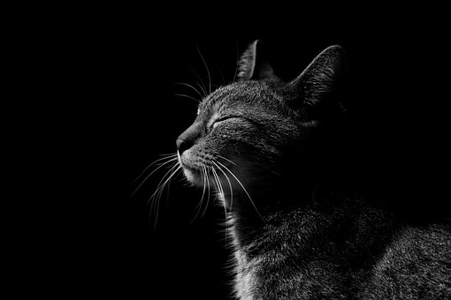 Katze, Glühen, Tiere, Pelz, Feline