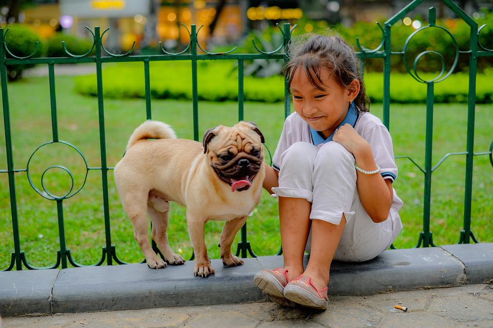 Children, Girl, Pug, Fence, Dog, Garden, Portrait