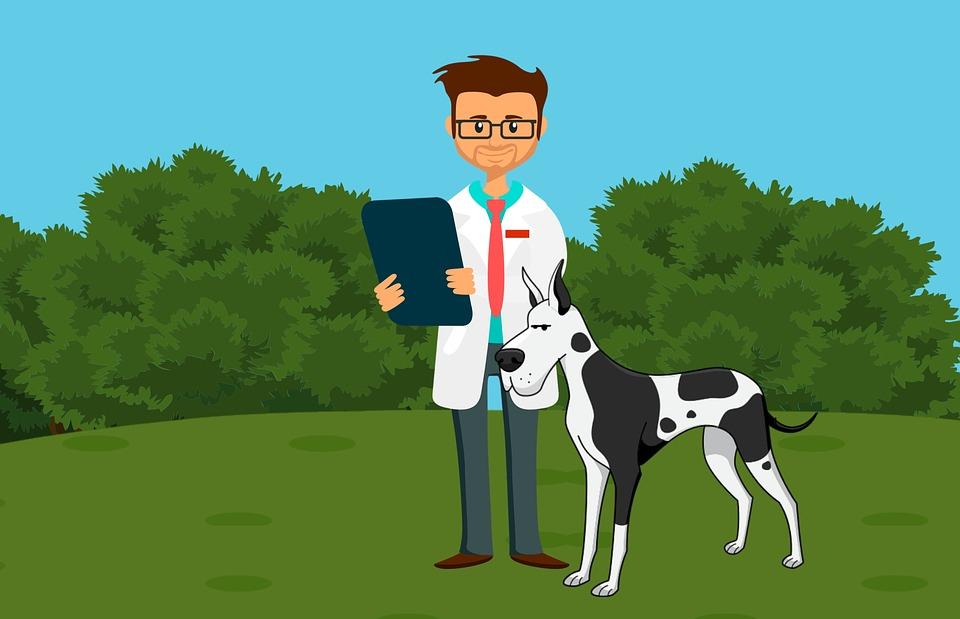 獣医, 医師, 犬, 屋外, 医療, 心をチェックします, 聴診器, かわいい, レポート, ケア, 健康診断