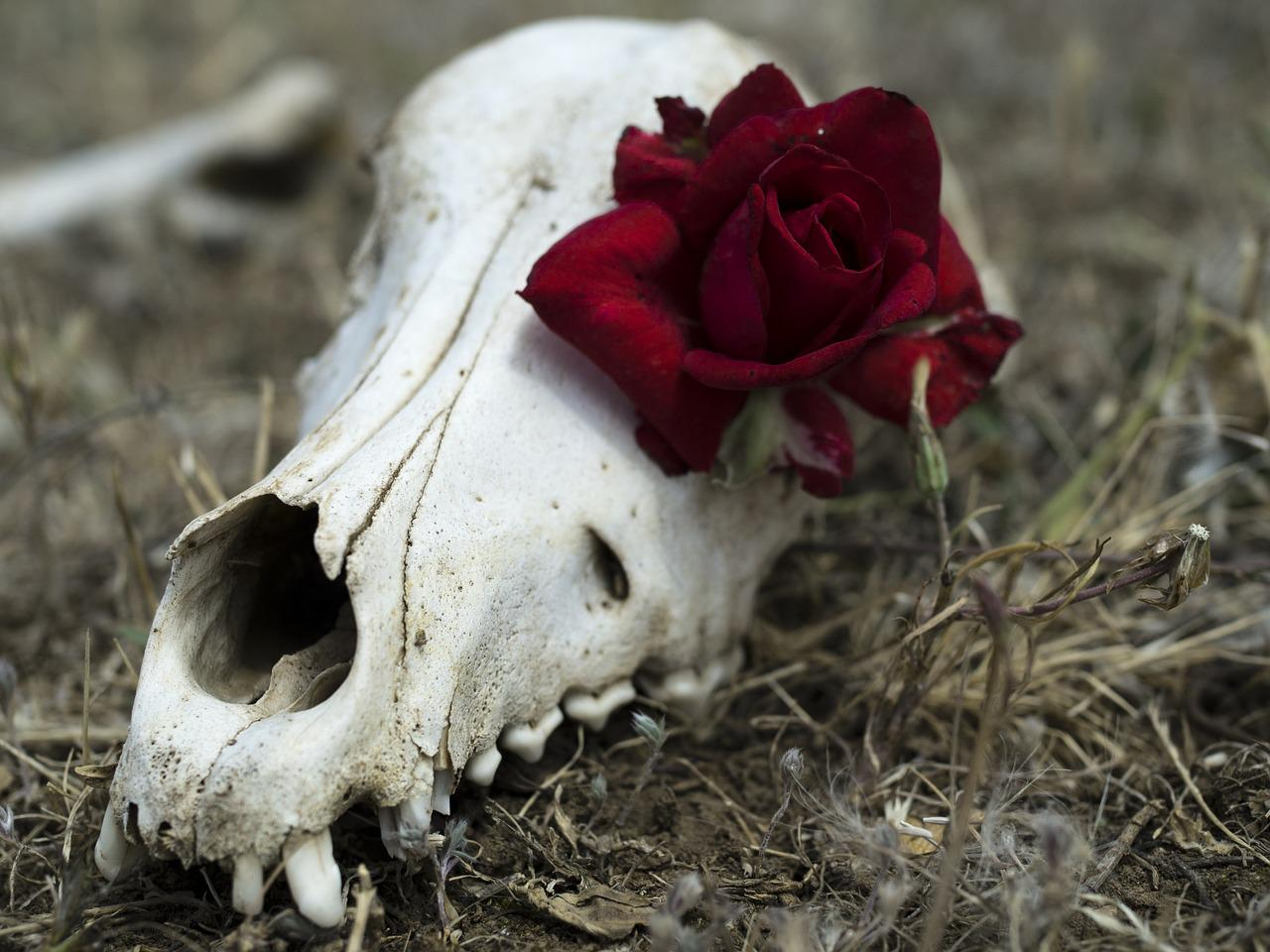вам фотографии череп с цветами образом, они