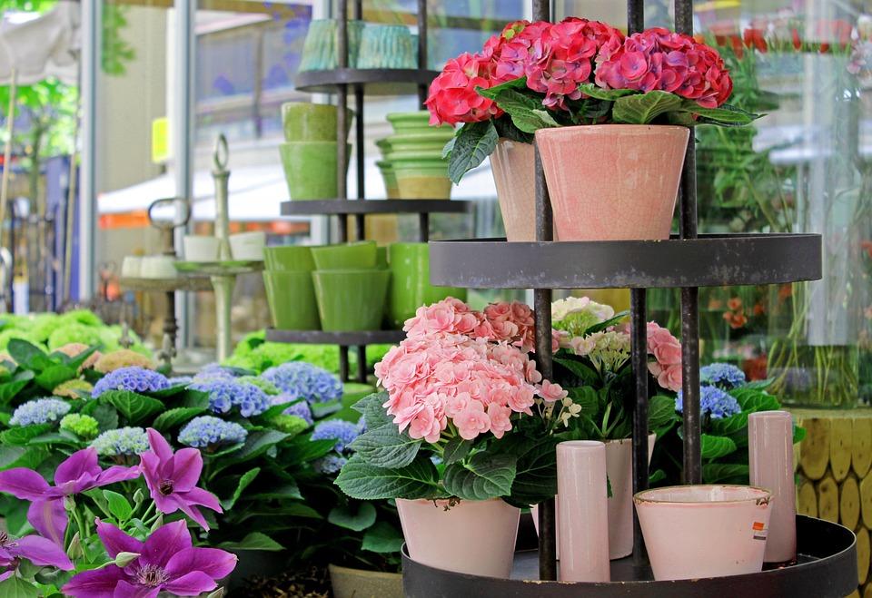 Rynku Kwiaty Doniczki Darmowe Zdjęcie Na Pixabay