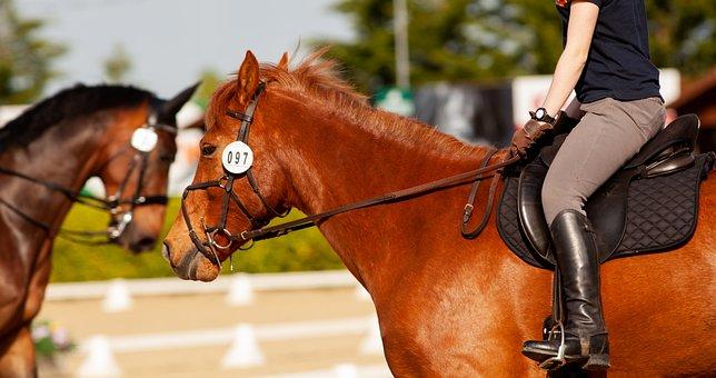 300+ Free Horse Chestnut & Chestnut Photos - Pixabay