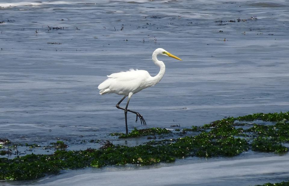 Zdarma velké bílé ptáky
