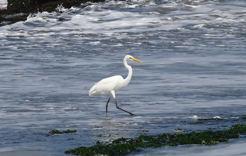 λευκός τύπος με μεγάλο πουλί μεγάλο τριχωτό γιαγιά μουνί