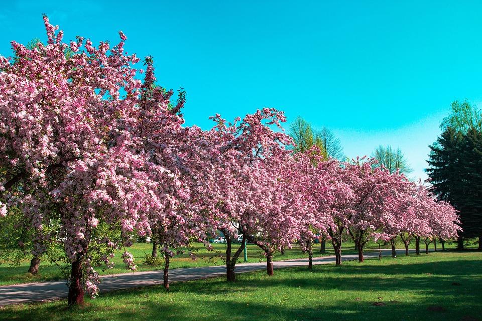 Flori înflorit Copac Fotografie Gratuită Pe Pixabay