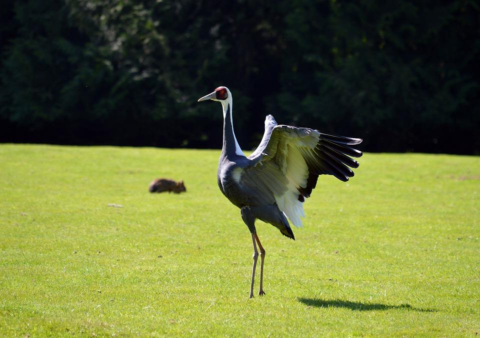 Fotky ptáka péro