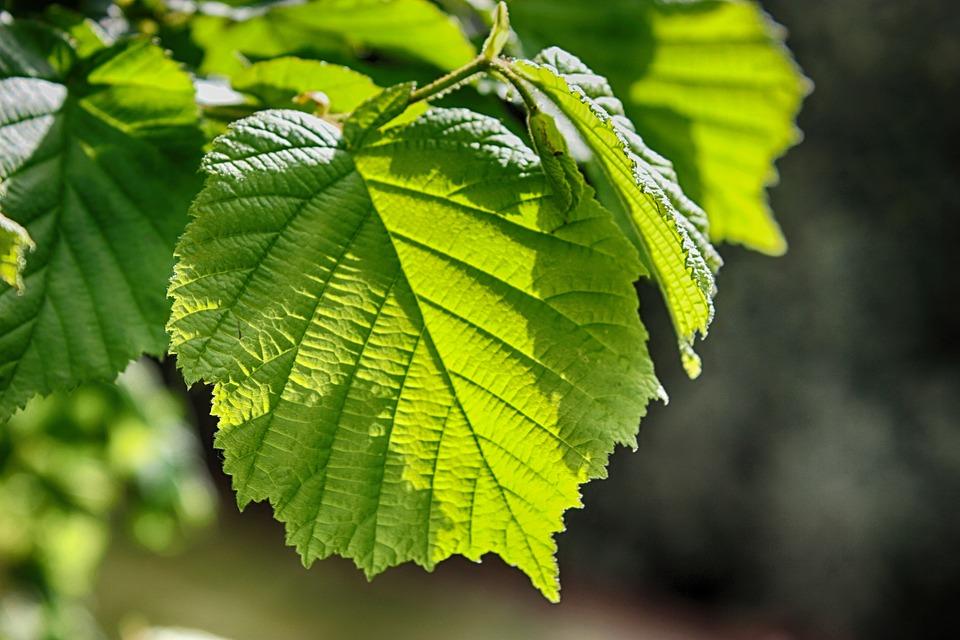 feuilles nature