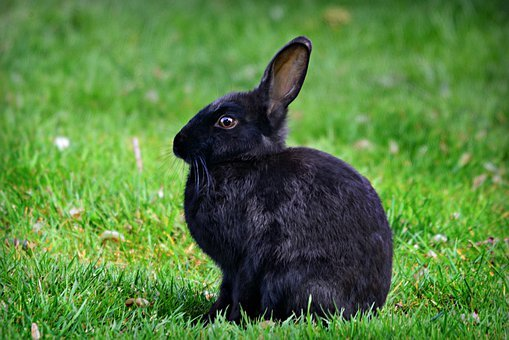 2,000+ Cute Rabbit Pictures for Free [HD] - Pixabay - Pixabay