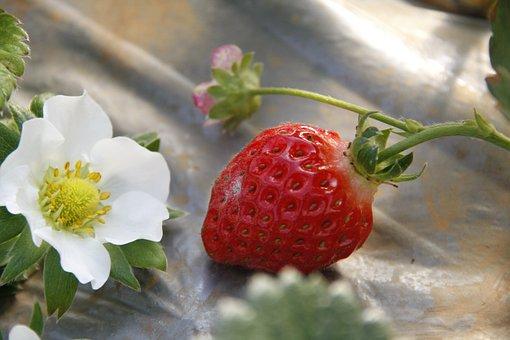 https://cdn.pixabay.com/photo/2019/05/14/07/06/strawberries-4201642__340.jpg