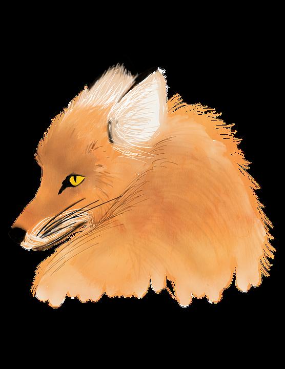 Aquarela Fox Animal Imagens Gratis No Pixabay