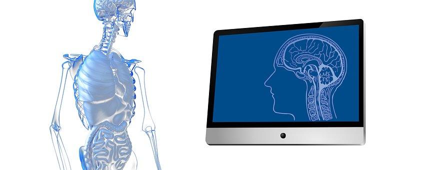Person, Guts, Organs, Monitor, Skull