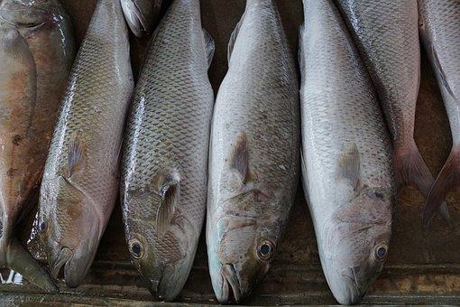 Ribe na tržnici