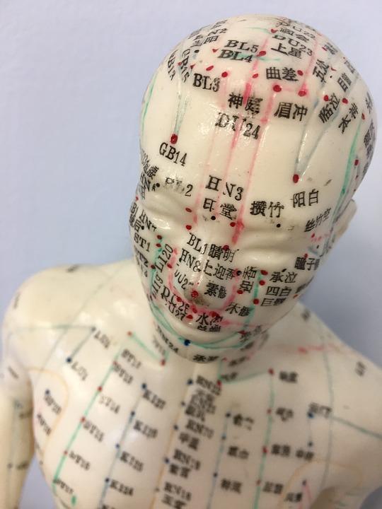 Acupunctuur, Acupunctuur Model, Etalagepop, Medische