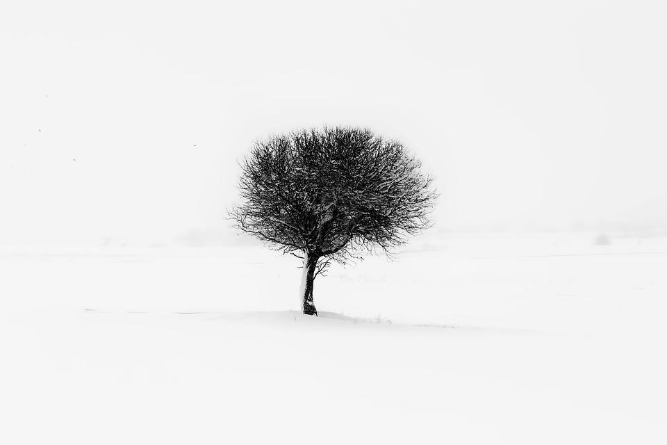 Tree, Minimal, Nature, Minimalism, Natural, Green