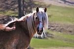 konie, łąki, grzywa