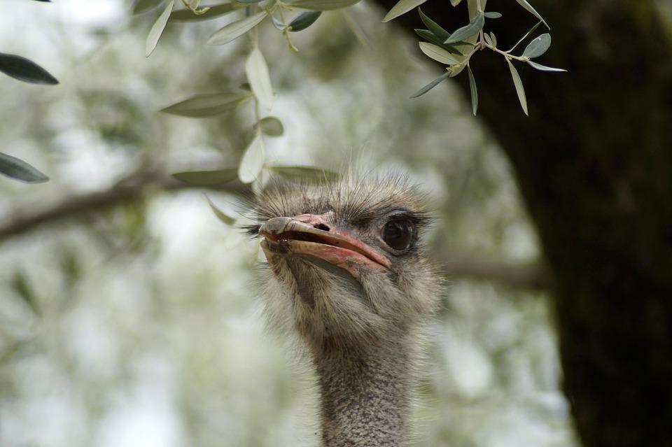 Φωτογραφίες από μεγάλο λευκό πουλί το καλύτερο της squirt
