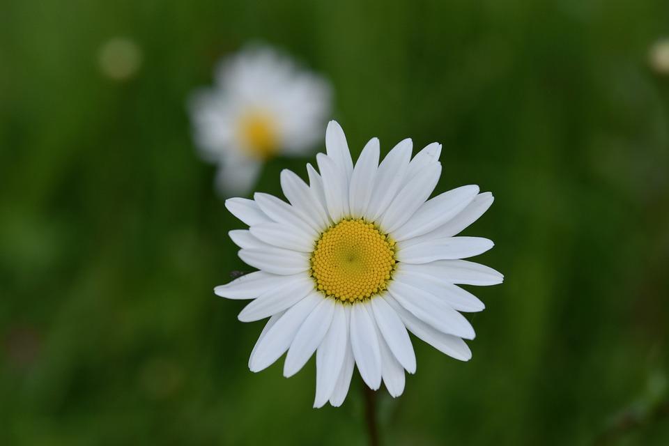 39+ Çiçek Resmi Jpg Pics