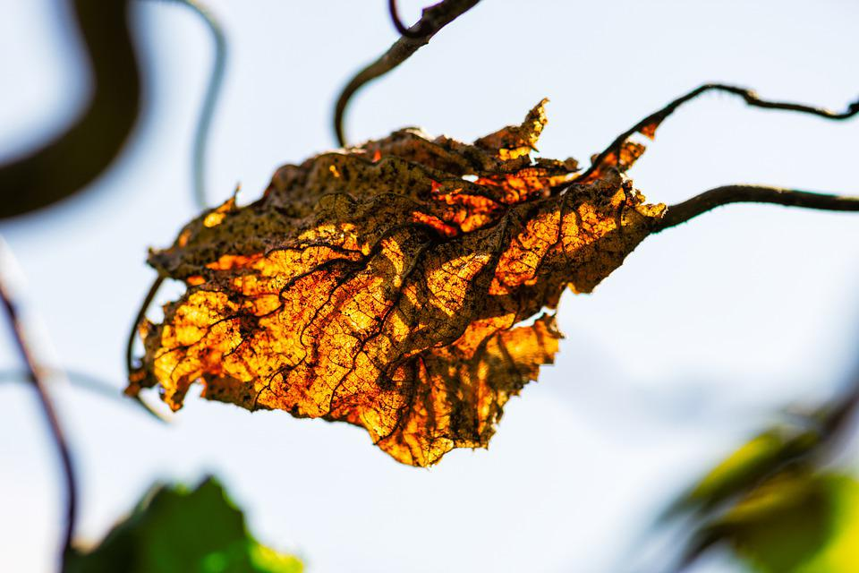 Leaves Autumn Fall Foliage - Free photo on Pixabay