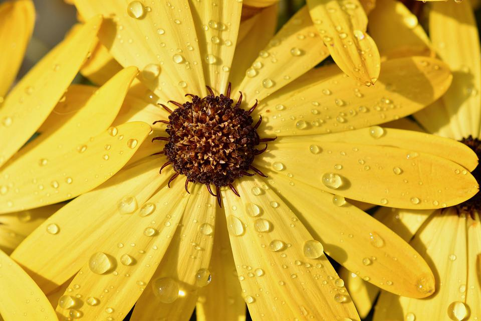Flower, Petals, Rain, Water Droplets, Stamens, Flora