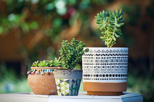 three pots of succulents