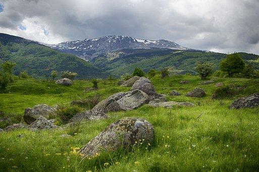 Mountains, Snow, Spring, Wild Flowers