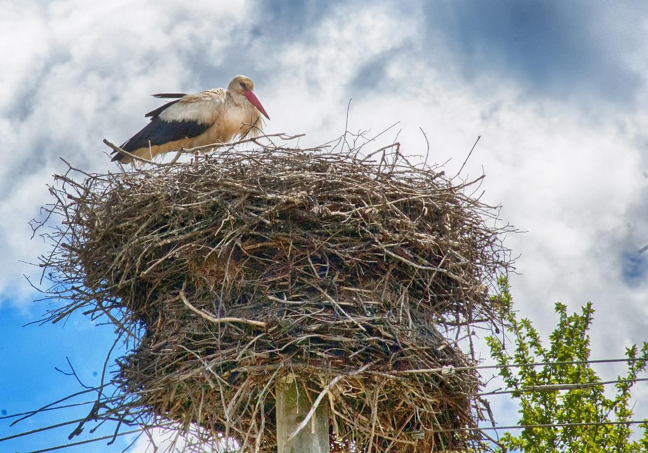 выборе картинки гнездо аиста на дереве можете