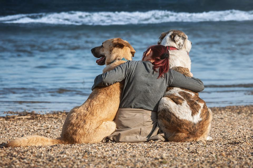 Dogs, Friends, Trust, Beach, Friendship, Happy