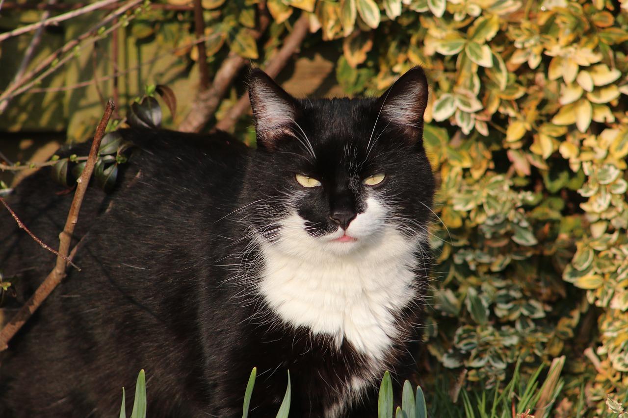 центре мрачные коты фото этом